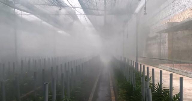 Lắp đặt hệ thống tưới phun sương cho Lanrừngtại Vinh, Nghệ An ở đâu tốt 1